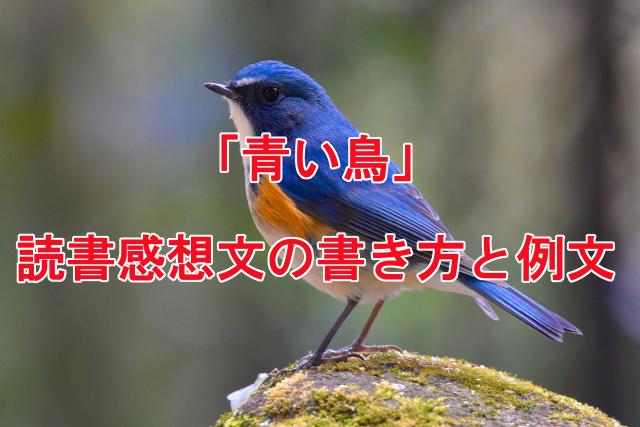青い鳥の読書感想文の書き方と例文
